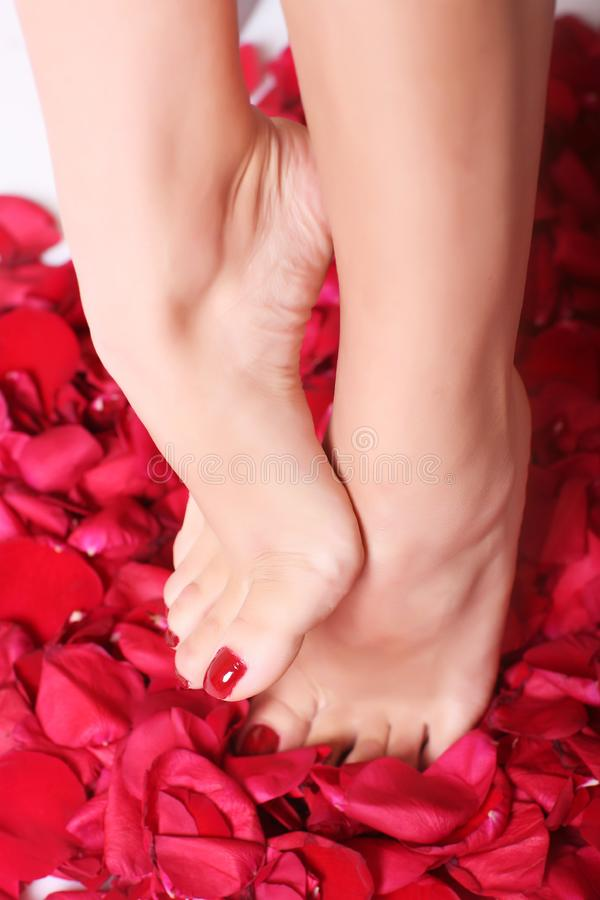 Feet and rose-petals royalty free stock images