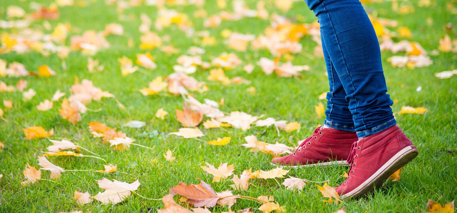 Feet sneakers walking on fall leaves. Autumn royalty free stock images