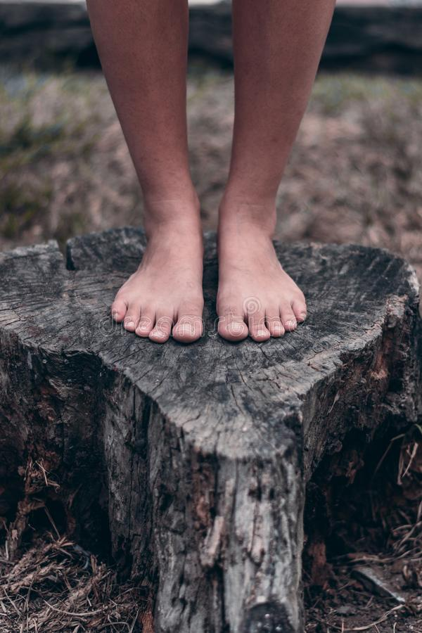 Feet on the tree in deforestation. Life stock images