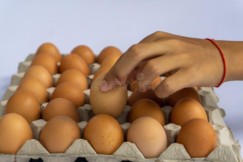 Fega ägg är nya i en papppacke som göras av återanvänt förlorat papper royaltyfri foto