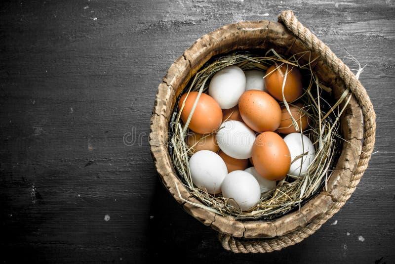 Fega ägg i en trähink royaltyfria bilder
