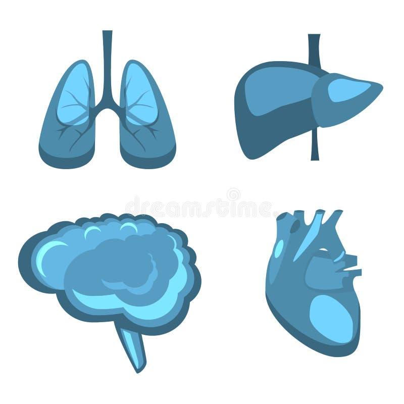 Fegato umano degli organi interni, cervello, polmoni, anatomia della medicina del cuore illustrazione vettoriale