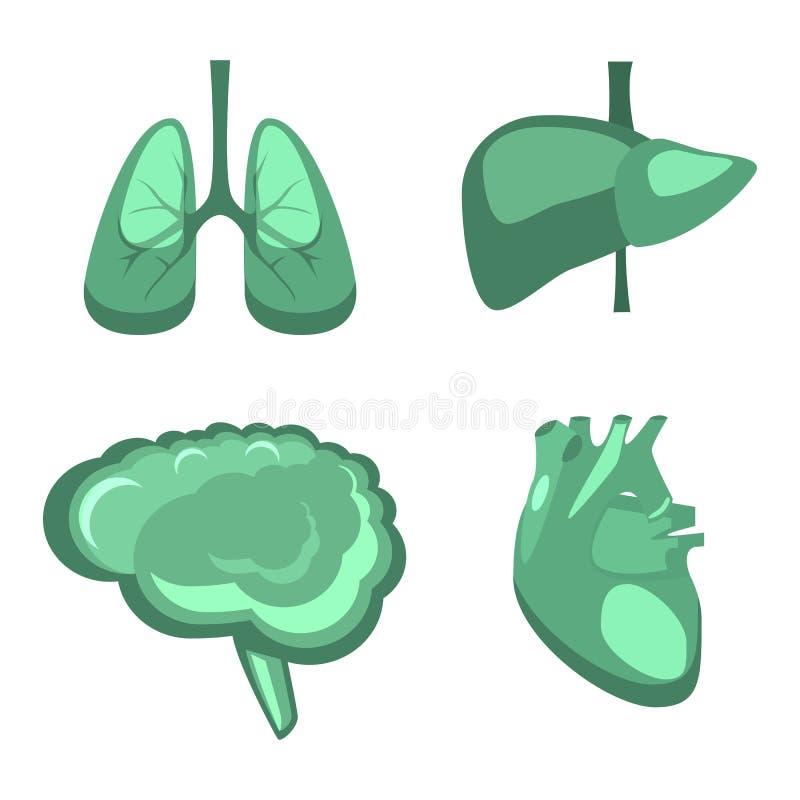 Fegato umano degli organi interni, cervello, polmoni, anatomia della medicina del cuore illustrazione di stock