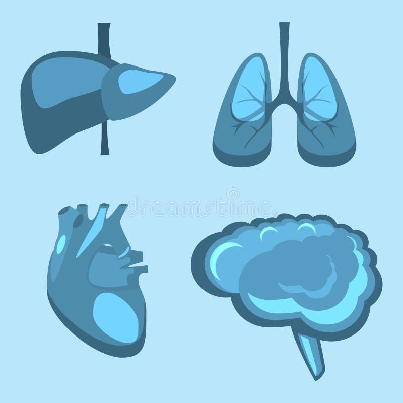 Fegato umano degli organi interni, cervello, polmoni, anatomia della medicina del cuore royalty illustrazione gratis