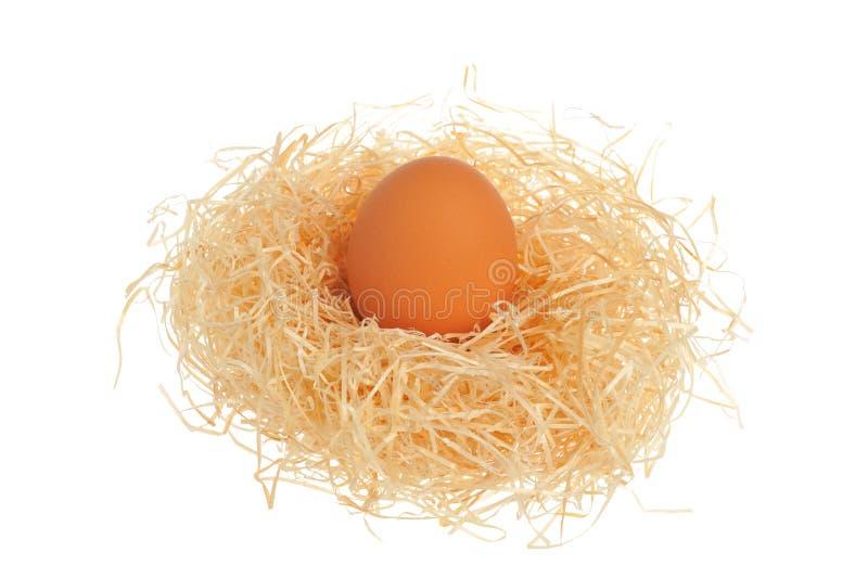 Fegt ägg i redet som isoleras på vit bakgrund royaltyfria bilder