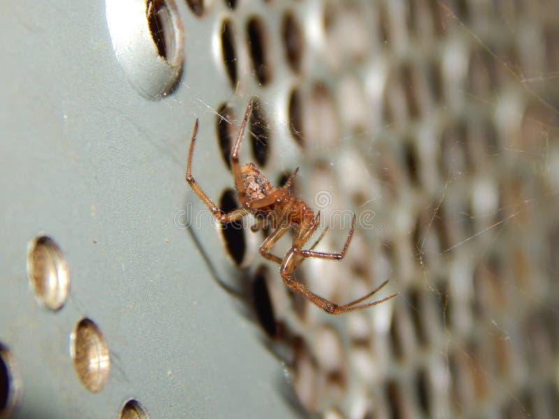 Fehlende Sektorkugel-Web spider Nahaufnahme lizenzfreie stockbilder