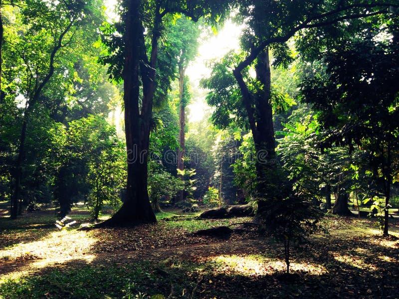 Fehlender Link im tiefen Wald stockbild