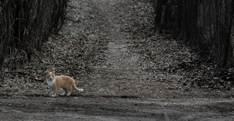 Fehlgeleitete Katze in der einsamen Straße stockfoto