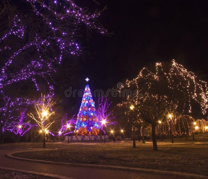 Feierliche Ablichtung für Weihnachten stockbild