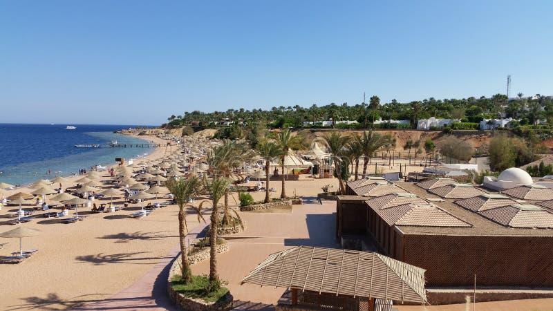 Feiertag in Ägypten Strand-und Palmen stockbild