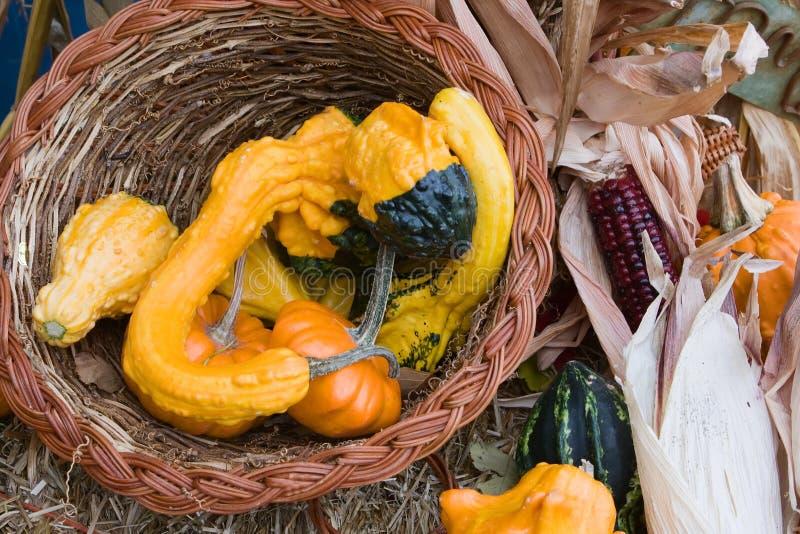 Feiertags-Kürbisse und Mais lizenzfreie stockbilder
