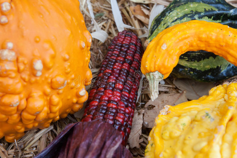 Feiertags-Kürbisse und Mais stockfotos