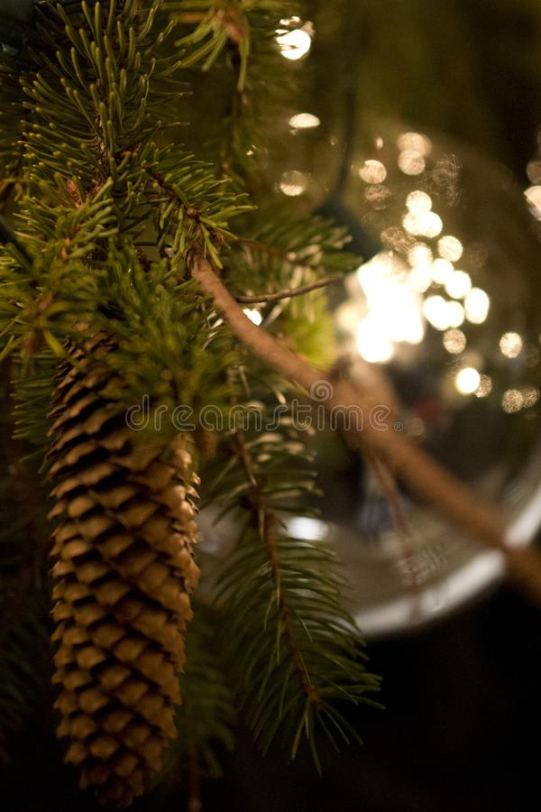 Feiertags-Kiefern-Kegel lizenzfreies stockbild