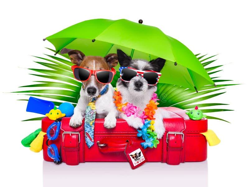 Feiertagshunde lizenzfreie stockfotos