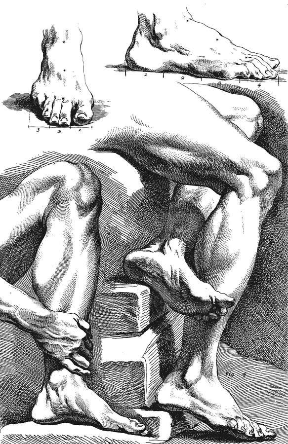 feign Anatomia i proporcje royalty ilustracja