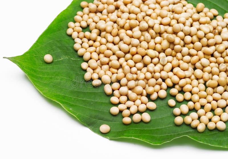 Feijão da soja foto de stock