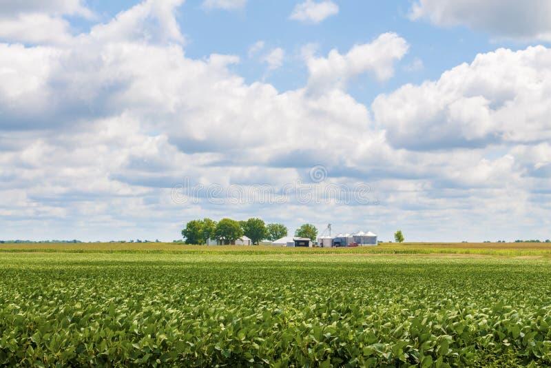 Feijão da soja e campo de milho fotos de stock royalty free