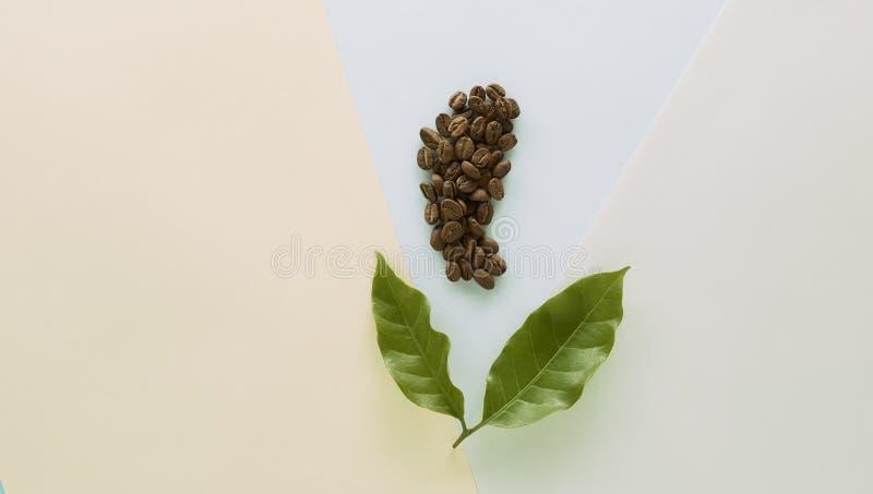 Feijão de café com folha do café ilustração royalty free