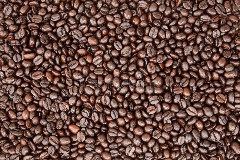 Feijão de café de Brown, textura, fundo, close up imagens de stock royalty free