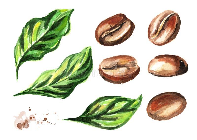 Feijão de café e grupo verde da folha Ilustração tirada mão da aquarela, isolada no fundo branco ilustração do vetor
