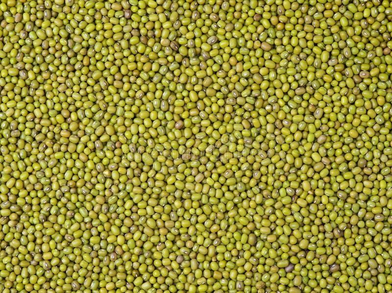 Feijão de Mung imagem de stock