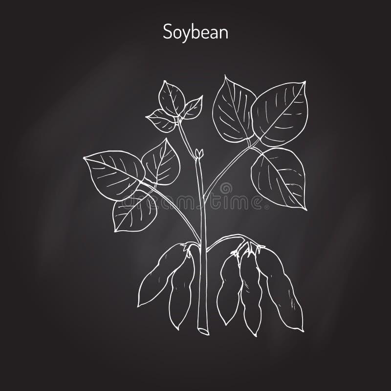 Feijão de soja, ou grão de soja ilustração stock