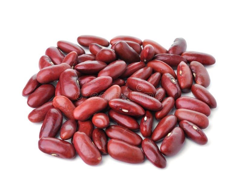 Feijão vermelho isolado no fundo branco imagem de stock