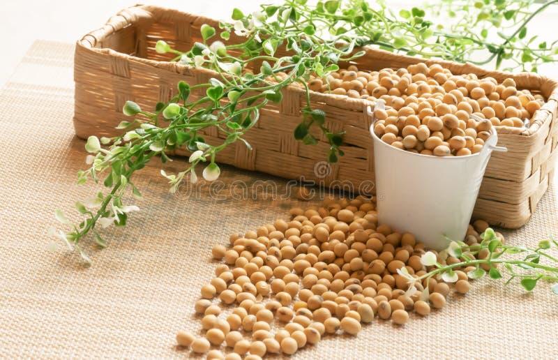 Feijões da soja na bacia branca e no busket marrom da malha decorados com folha verde foto de stock