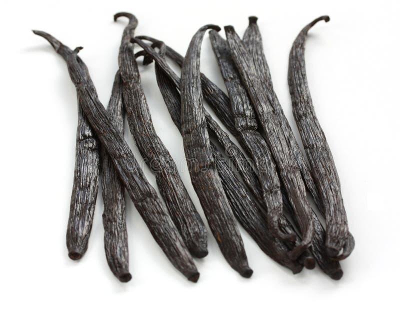 Feijões de baunilha de Madagascar imagens de stock