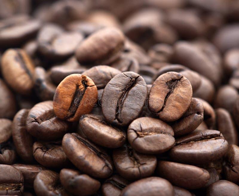Feijões de café fotografia de stock royalty free