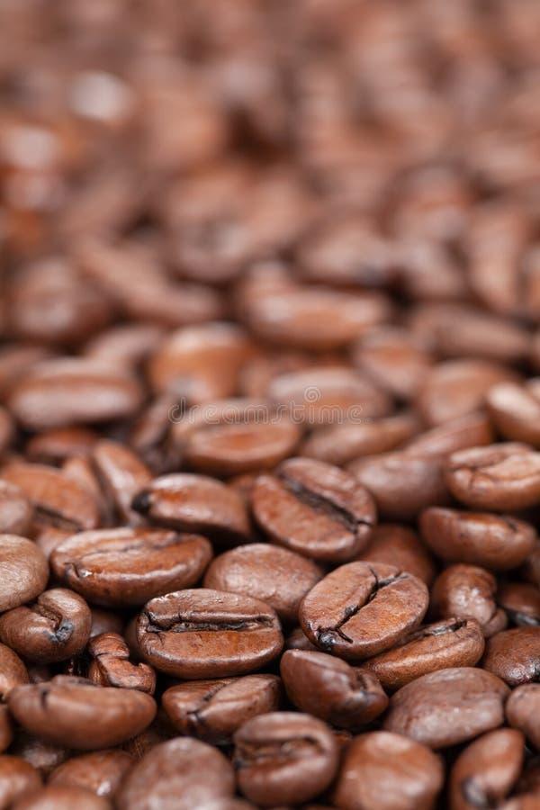 Feijões de café com espaço da cópia fotografia de stock