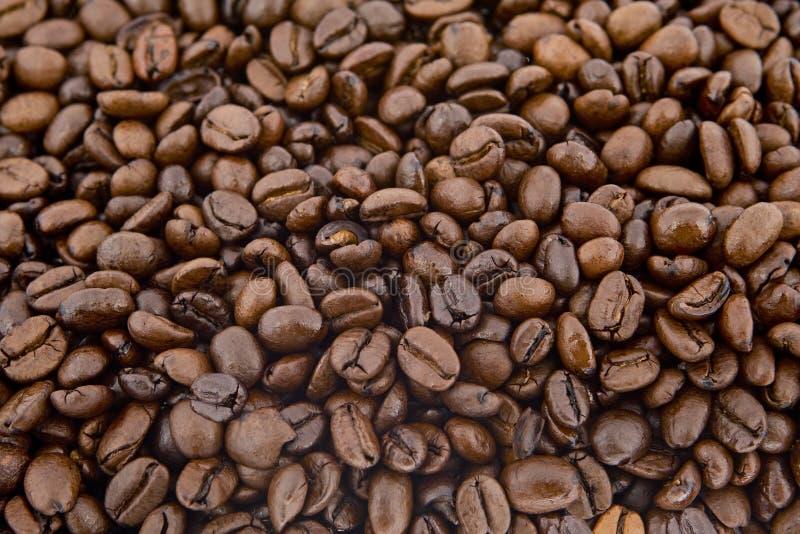 Feijões De Café Como O Fundo Foto De Stock Grátis