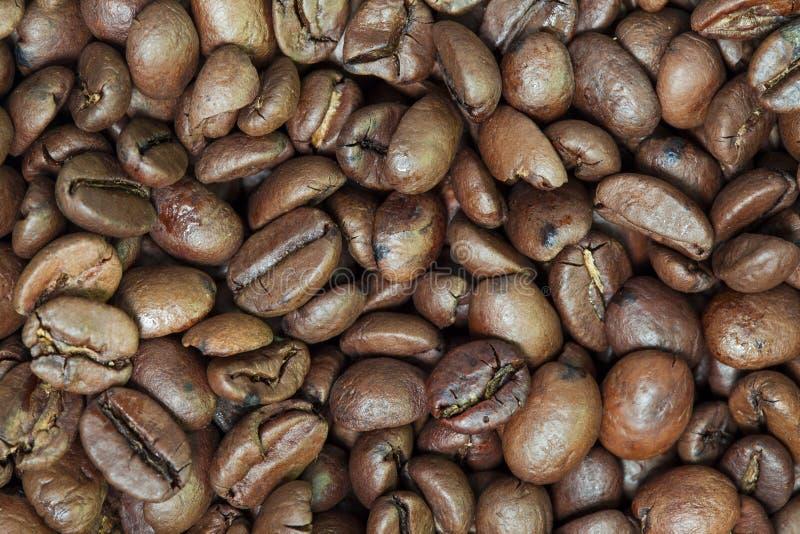 Feijões de café crus fotos de stock royalty free