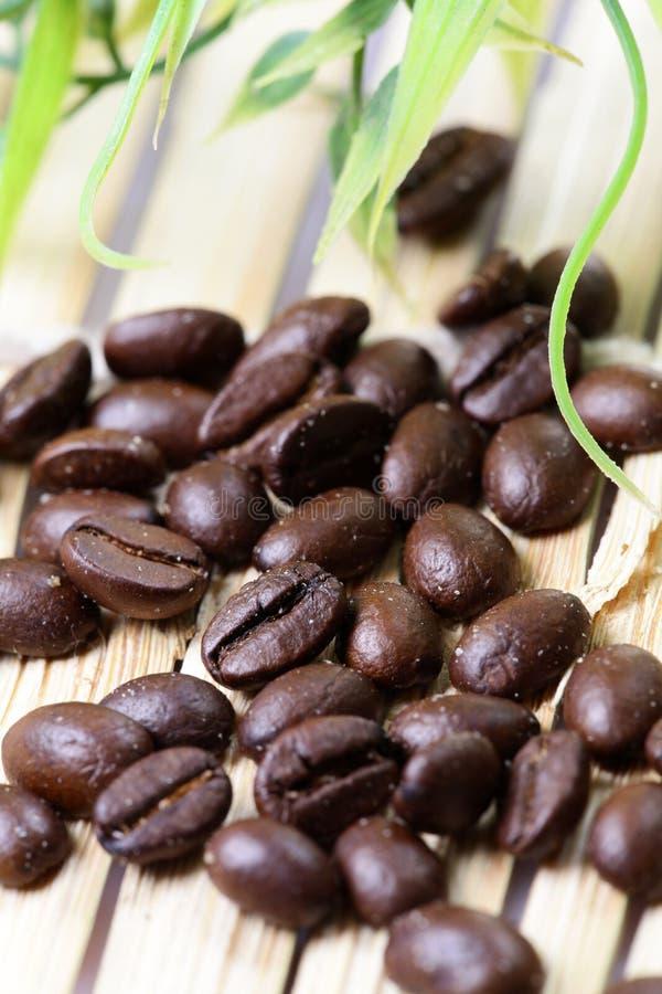 Feijões de café frescos fotos de stock