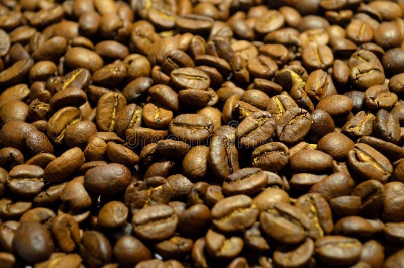 Feijões de café frescos fotos de stock royalty free