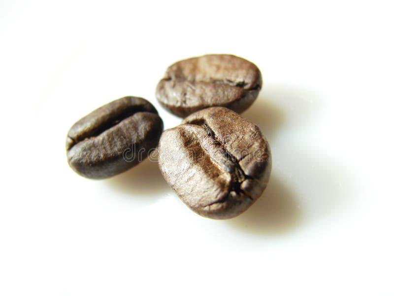 Feijões de café marrons naturais 3 imagens de stock royalty free