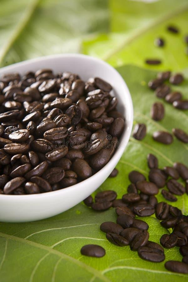 Feijões de café nas folhas verdes imagens de stock