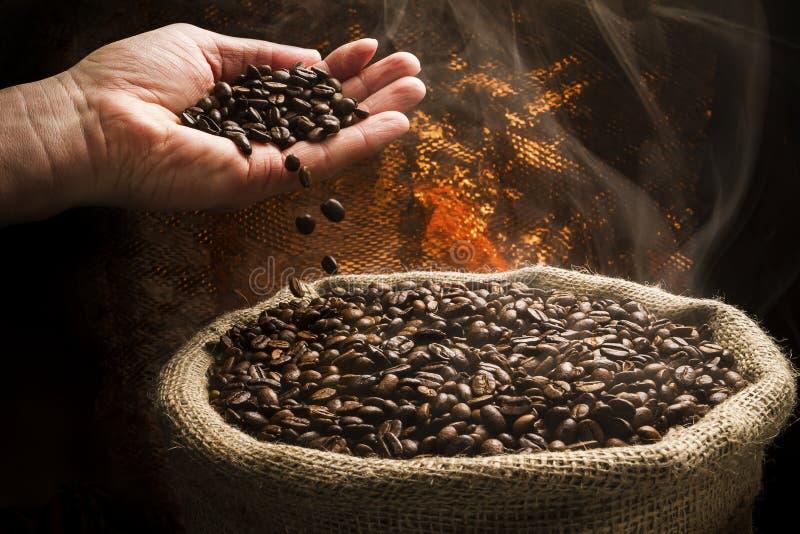 Feijões de café que caem da mão ao saco completamente de feijões de café fumarentos. foto de stock