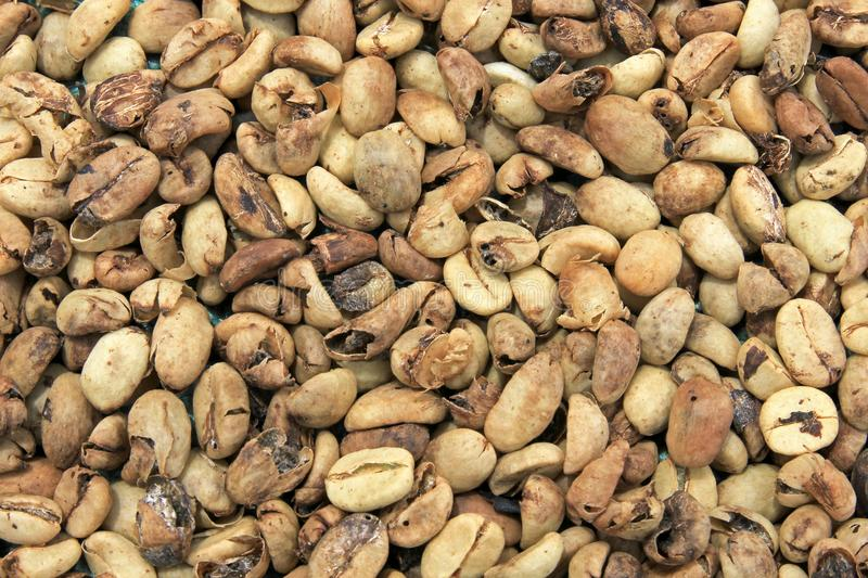 Feijões de café que secam, perto do EL Jardin, Antioquia, Colômbia imagem de stock