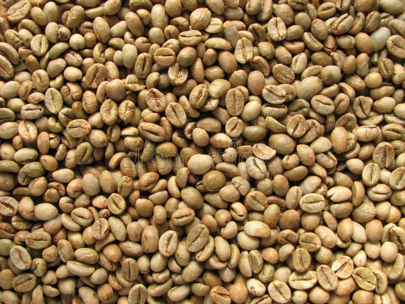Feijões de café robusta verdes fotografia de stock