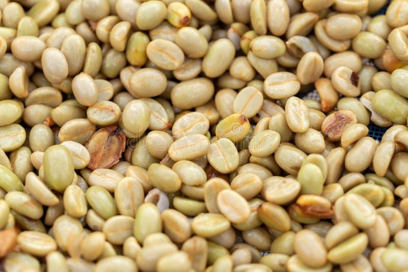 Feijões de café verdes orgânicos naturais imagens de stock royalty free