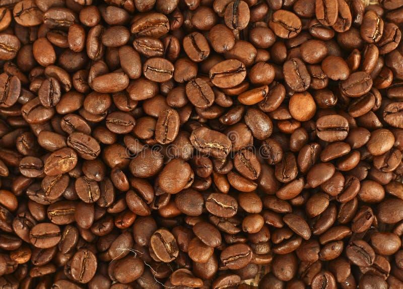 Feijões de Cofee imagens de stock