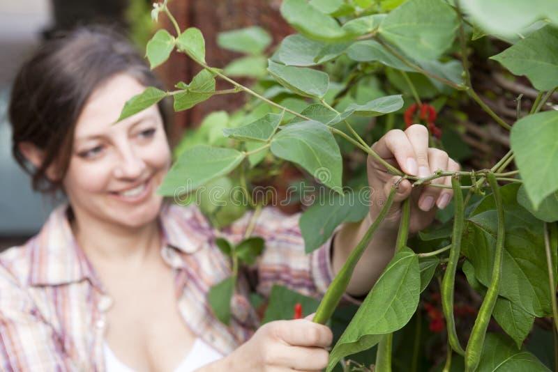 Feijões de corredor de sorriso da colheita da mulher imagem de stock royalty free