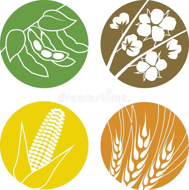 Feijões de soja, algodão, milho e trigo ilustração do vetor