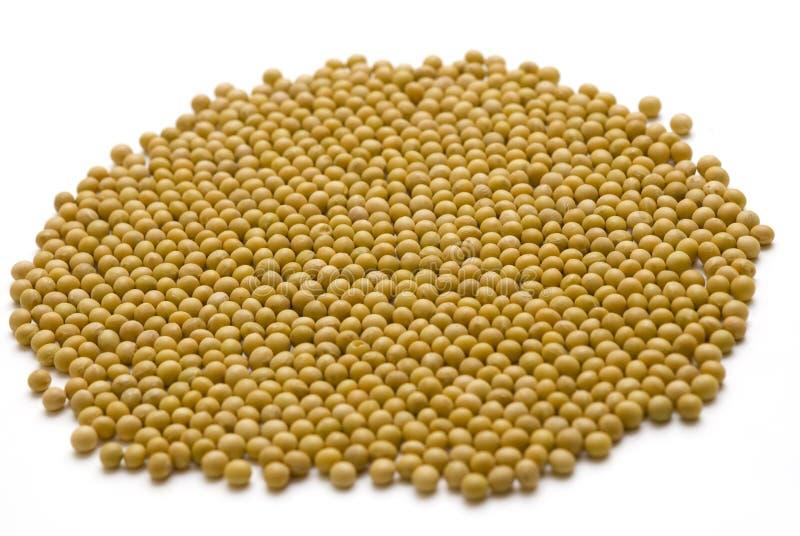 Feijões de soja com fundos brancos fotografia de stock royalty free