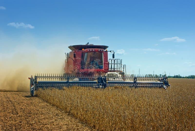 Feijões de soja da colheita mecanizada imagem de stock