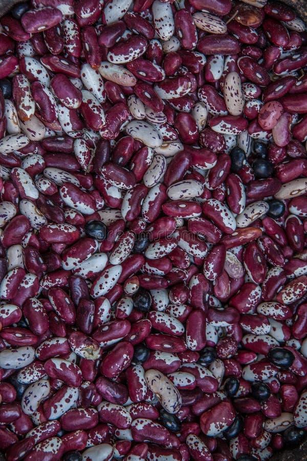 Feijões secados do roxo Pode ser usado como um fundo imagem de stock