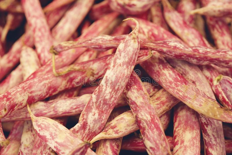 Feij?es de Borlotti Feijões de corda vermelhos frescos fotos de stock