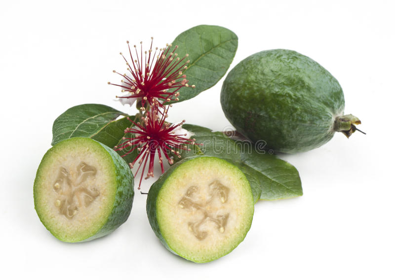Feijoa with flowers. Fresh New Zealand feijoa fruit with leaves and flowers isolated on white stock images