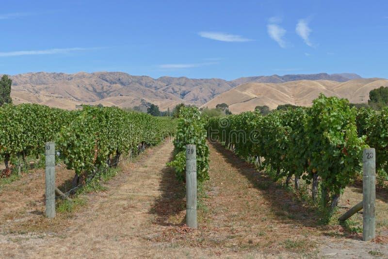 Feine Weine von einem Weinberg in Neuseeland stockbilder